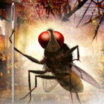 Eega, vuelve la mosca más dura